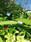FlowerBed_SE Side